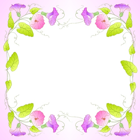 Flowers Frame of bindweed  Vector illustration  illustration