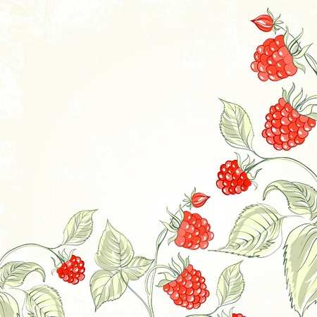 transparencies: Raspberry, watercolor  Vector illustration, contains transparencies, gradients and effects