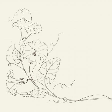 bindweed: Bindweed flower pattern  Vector illustration