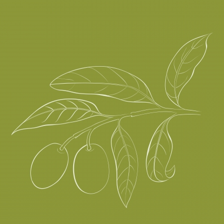 Two olives on branch with leaves isolated on green  Vector illustration  Stock Illustration - 20827586
