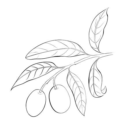 Hand drawn olive branch  Vector illustration Stock Illustration - 20827587