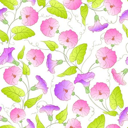 bindweed: Bindweed flower seamless pattern  Vector illustration