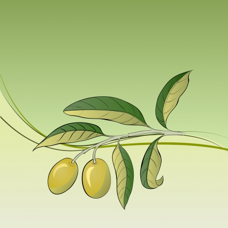 Two olives on branch  Vector illustration  illustration