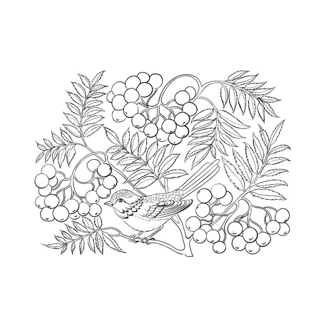 Art rowan tree isolated over white. Vector illustration. Vector