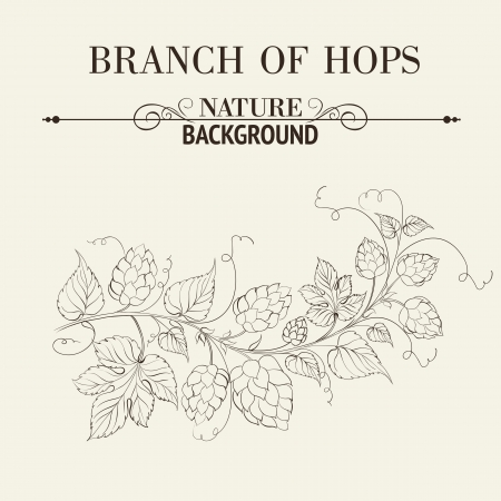 Hops with leafs isolated on sepia. Vector illustration. Vector