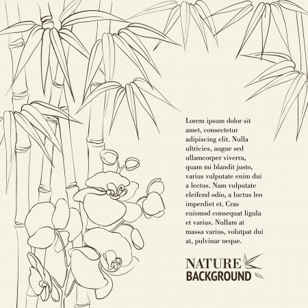 Beautiful orchid flowers and bamboo isolated on sepia. Vector illustration. Vector