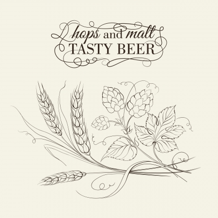barley hop: Wheat and hop on sepia. Vector illustration. Illustration