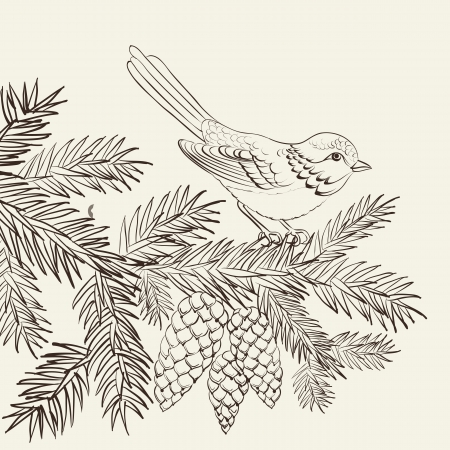 holly leaf: Bird on christmas fir and pinecone. Vector illustration.