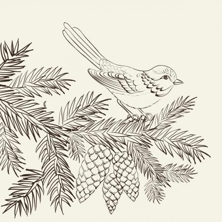 evergreen branch: P�jaro en el abeto de Navidad y pi�a. Ilustraci�n del vector.
