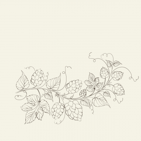 liane: Hops with leafs isolated on sepia. Vector illustration.