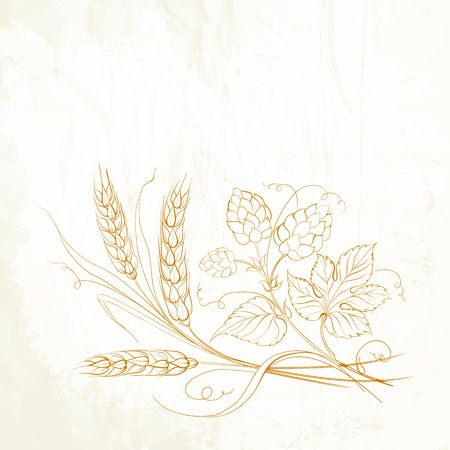 Golden wheat and hop on sepia. Vector illustration. Vector