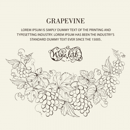 vines: Design for wine list. Vector illustration.