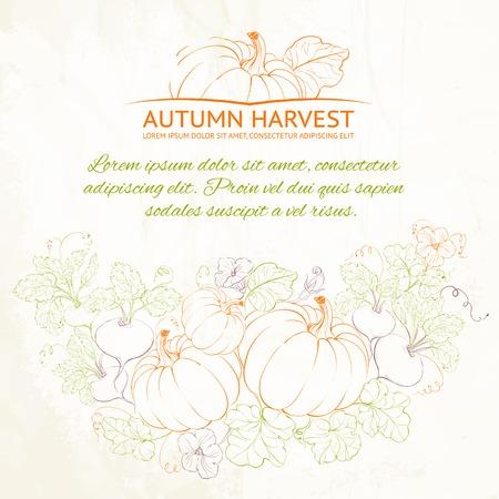 Pumpkins, Autumn harvest. Vector illustration. Stock Vector - 23079550