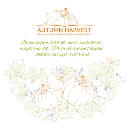 Pumpkins, Autumn harvest. Vector illustration. Vector