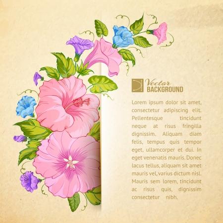 convolvulus: Bindweed flower on paper. Vector illustration. Illustration