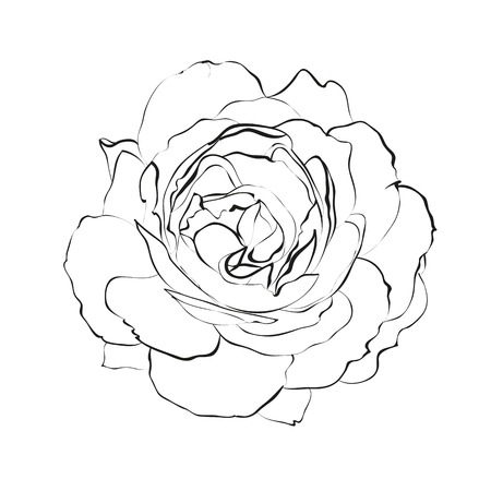 Contour of rose isolated over white. Vector illustration Vector