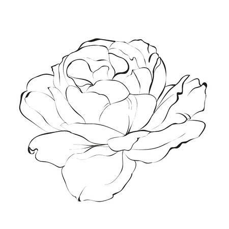 insulate: Contour of rose isolated over white. Vector illustration Illustration