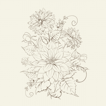 Chrysanthemum isolated over white.  Vector