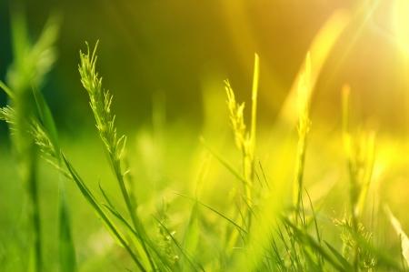 Nascer do sol sobre um prado de floresc