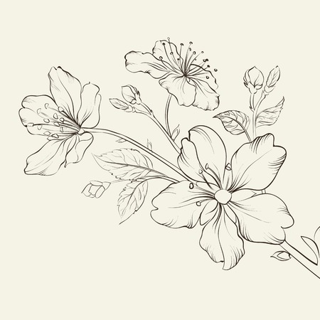 Kalligraphie Kirschblüte. Vektor-Illustration. Standard-Bild - 25866877