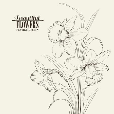 narcisos flores atadas aisladas en blanco