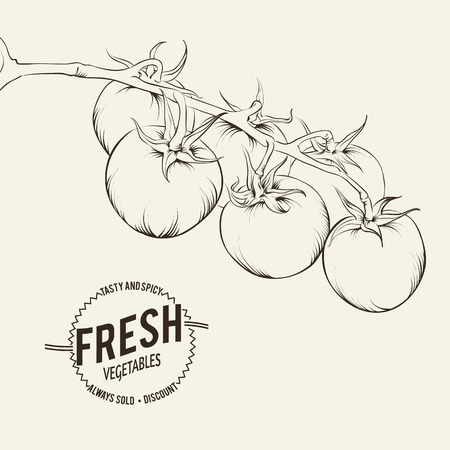 Tomatoes background Vector