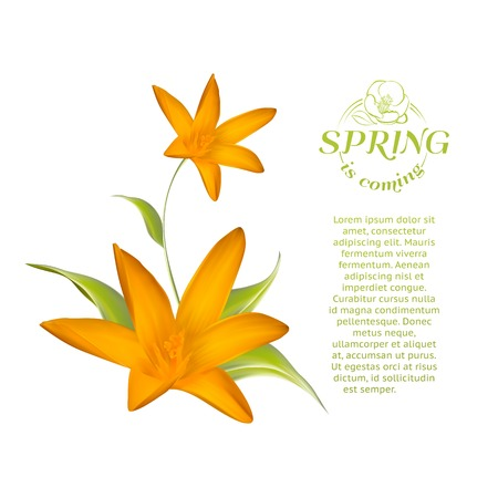 Card of isolated crocus blossom. Vector illustration. Vector