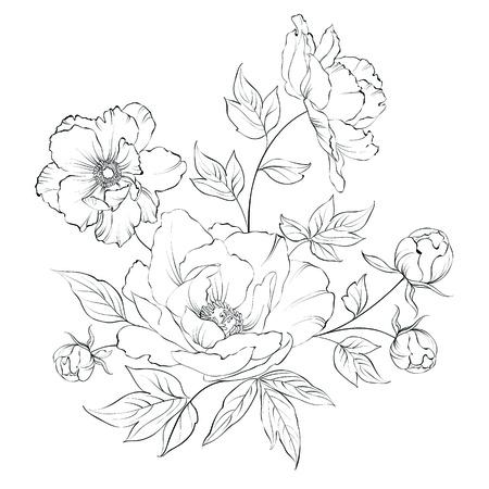 Bush of beautiful peonies, ink engraving. Vector illustration. Vector