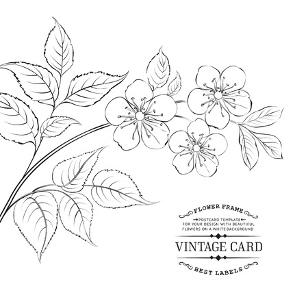 Calligraphy cherry and blossom brunch. Vector illustration.
