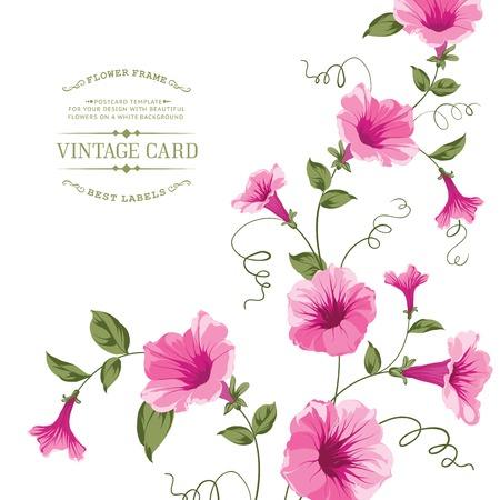 Bindweed flower for vintage card design. Vector illustration.