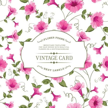 bindweed: Luxurious vintage card of color bindweed. Vector illistration.