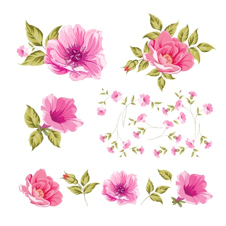 daisy pink: Collection set of flower heads isolated on white background. Vector illustration. Illustration