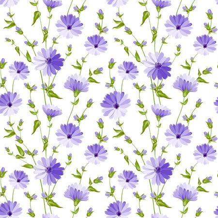 chicory flower: Chicory seamless pattern on white background  Vector illustration  Illustration