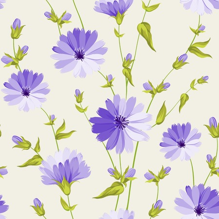 Chicory seamless pattern on white background  Vector illustration  Vector