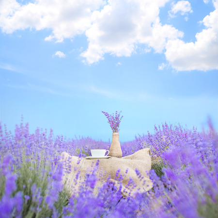 lavender field: Lavender flower composition on field with vase and cup