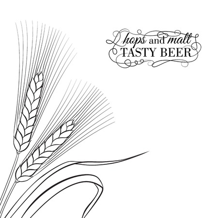 bran: Ears of Wheat visual graphic icons, ideal for beer labels  Vector illustration