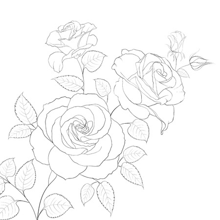 White rose isolated on white background  Vector illustration  Vector