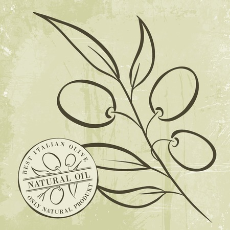 Olive Branches over gray background. Vector illustration. Vector