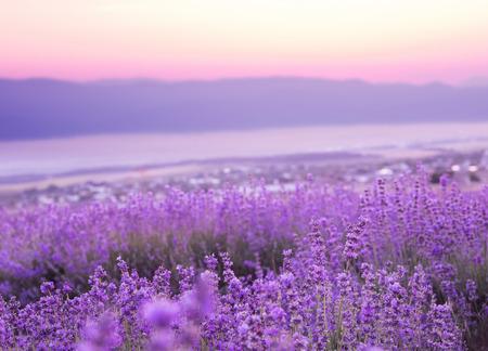 Mooi beeld van lavendel veld over zonsondergang zomer landschap.
