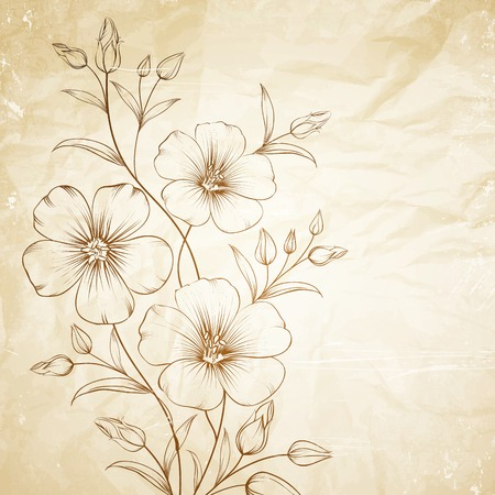 flax: Linum flower over old paper. Vector illustration. Illustration