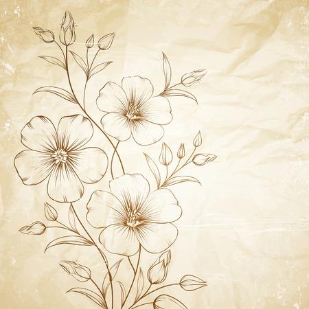 flax seed: Linum flower over old paper. Vector illustration. Illustration