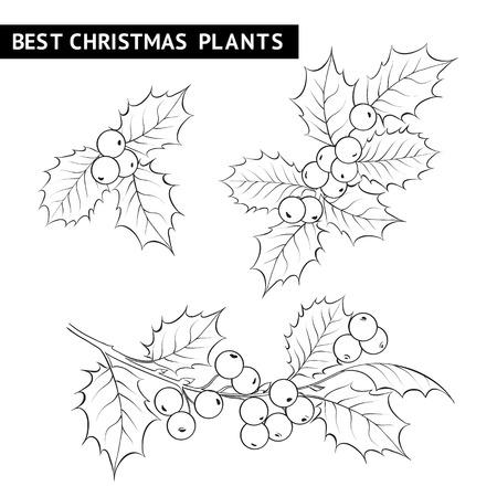 muerdago: Navidad muérdago dibujo a lápiz rama. Ilustración del vector. Vectores
