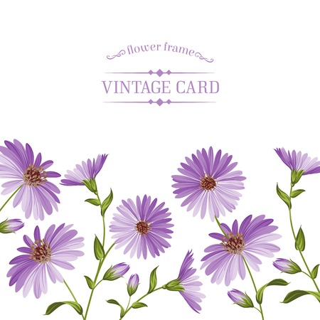 chamomel: Vintage card template with chrysanthemum flower head. Vector illustration. Illustration
