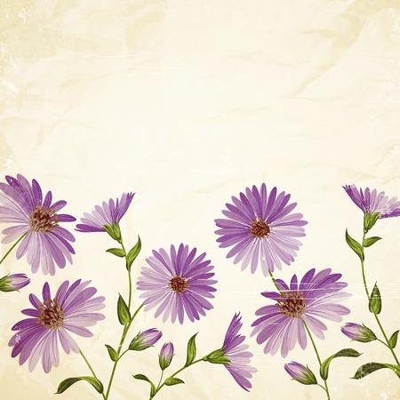 camomiles macro: Card template with chrysanthemum flower head. Vector illustration. Illustration