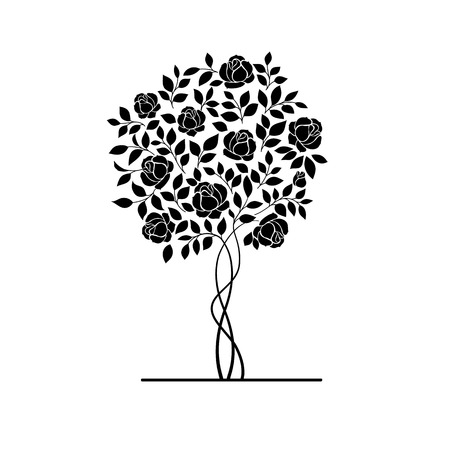Rose garden bush isolated over white background. Vector illustration.