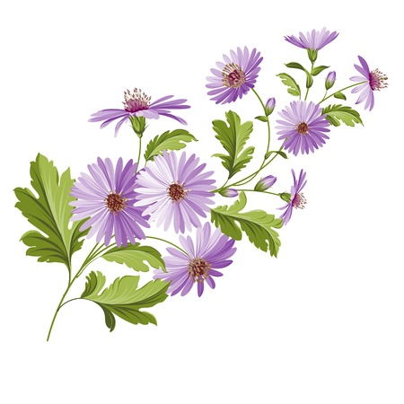 Vintage design with chrysanthemum flower head isolated over white. Vector illustration.