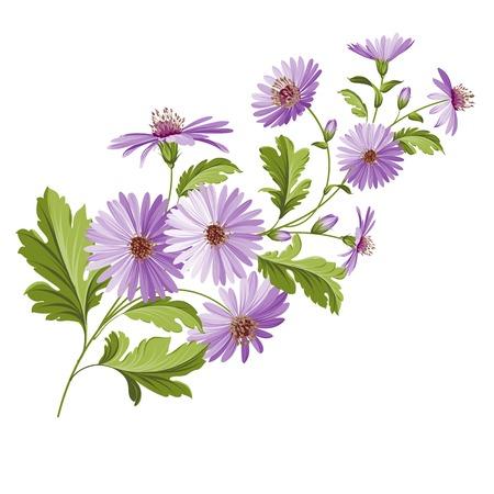 chamomel: Vintage design with chrysanthemum flower head isolated over white. Vector illustration.
