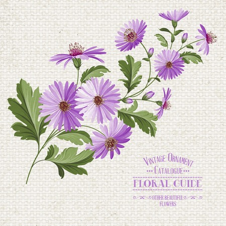 chamomel: Wildflower print over linen babric texture. Vector illustration. Illustration