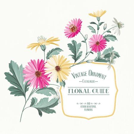 chamomel: Vintage flower card print with color chrysanthemum. Vector illustration.