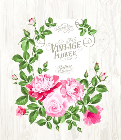 chik: Pink peony with a vintage label over wooden texture. Vector illustration. Illustration
